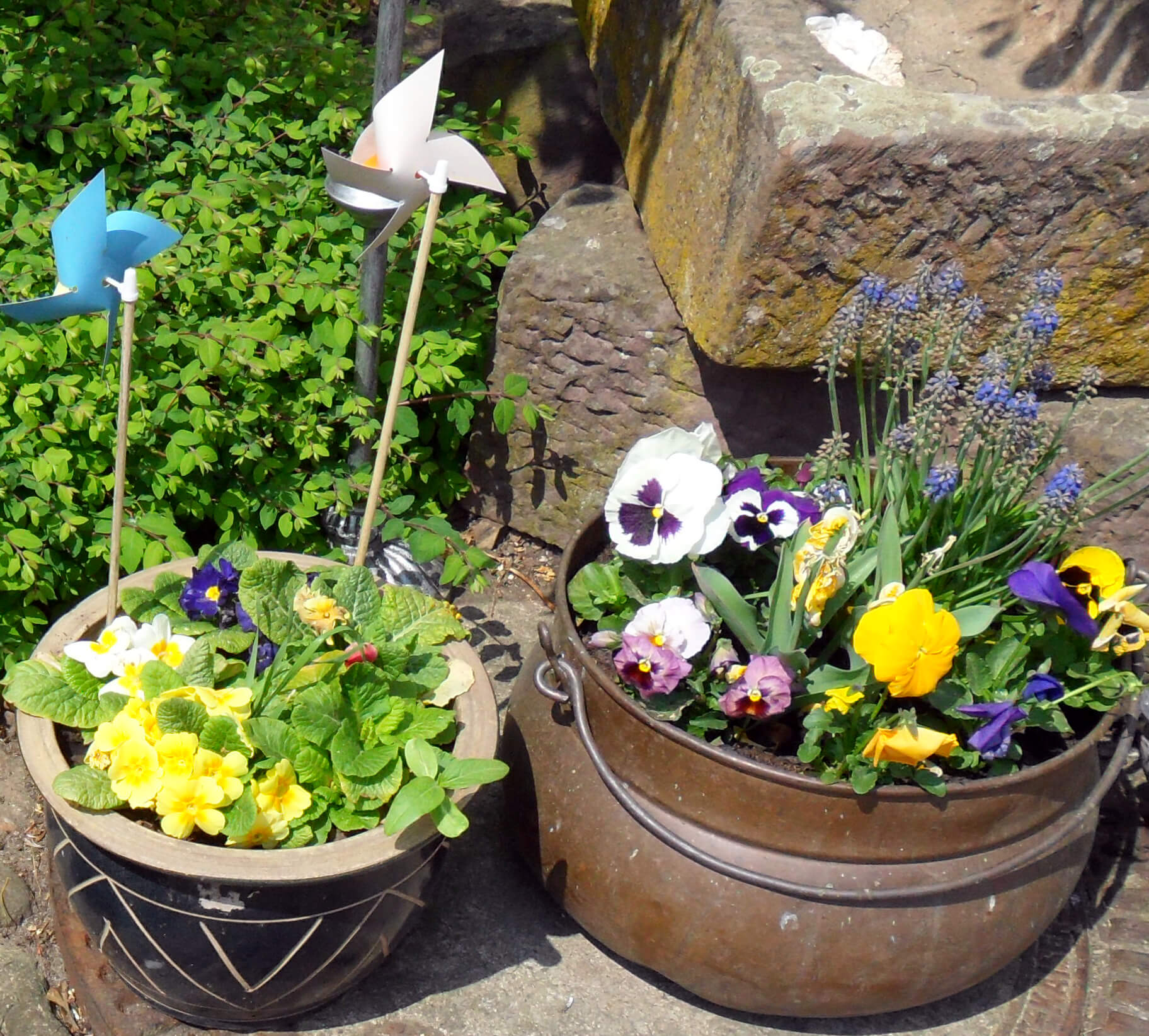 plant pots with flowers outside